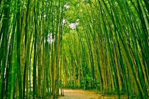 bamboo_romance_south_korea