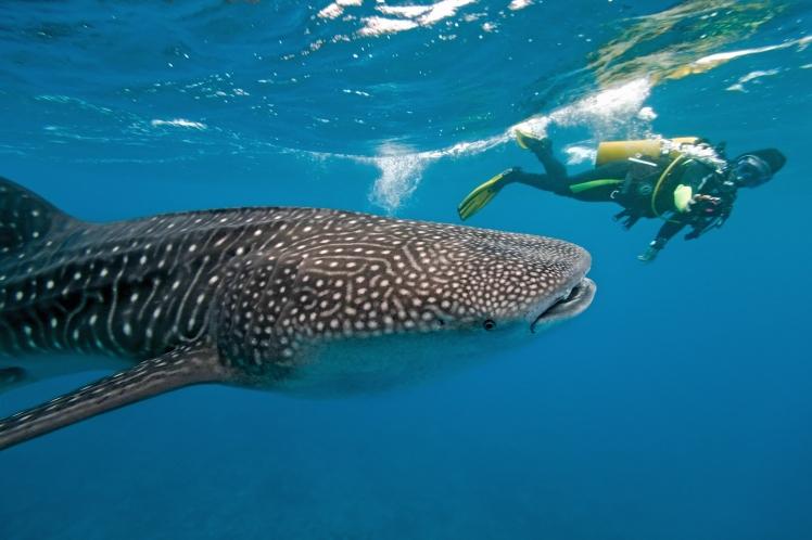 MaldiveDiving2.jpg