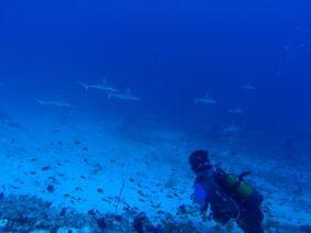 MaldiveDiving5