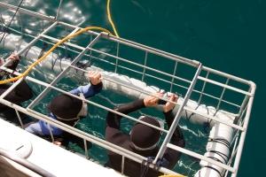 Sudafrica squalo bianco immersioni gabbia