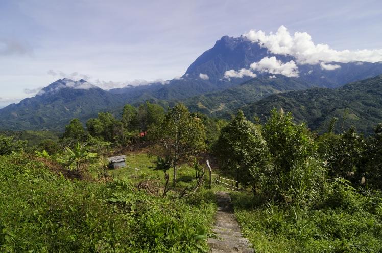 BorneoForesta
