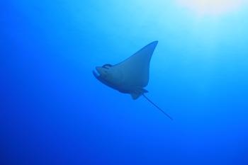 Aquila_Mare_Polinesia