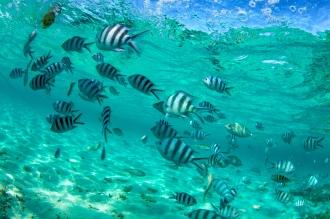 Bahamas_Reef