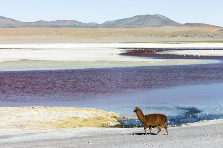 Atacama_deserto
