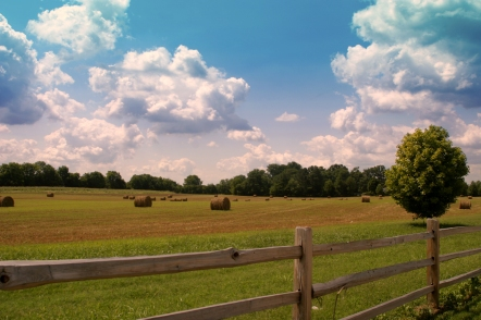 campi_country_tennessee
