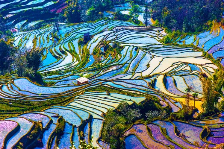 Yunnan terrazzamenti riso viaggio