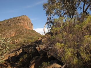 South Australia, il bush nel Flinders Ranges