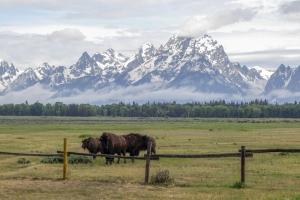 Libri Rocky Mountains Grand Teton National Park Proulx