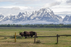 Libri Rocky Mountains Grand Teton National Park Proulx